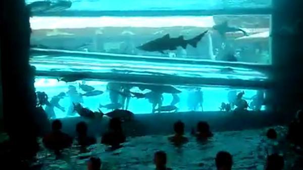 Kasino v Las Vegas nabízí tobogán mezi žraloky!